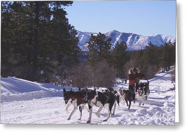 Mancos Greeting Cards - Mushing Uphill Greeting Card by FeVa  Fotos