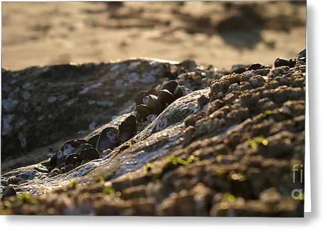 Ventura California Greeting Cards - Mussels Sunset Greeting Card by Henrik Lehnerer