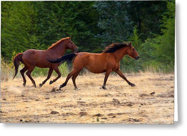 Wild Horse Greeting Cards - Mustang Gallop Greeting Card by Mike  Dawson