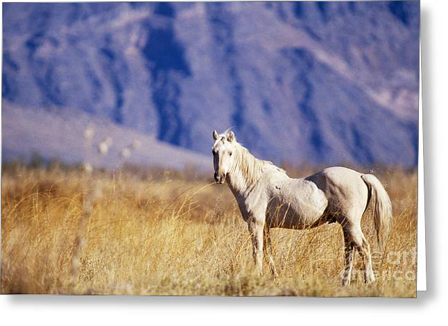 Mustang Greeting Card by Mark Newman and Photo Researchers