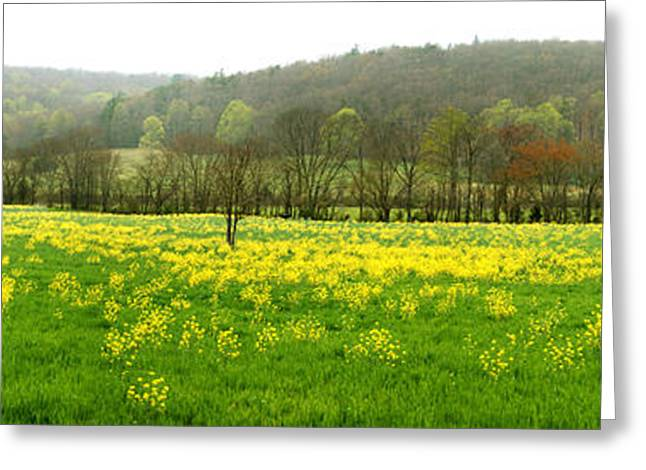Tennessee Farm Greeting Cards - Mustard Field Greeting Card by Paul Mashburn