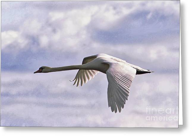 Flying Mute Swan Greeting Cards - Mute Swan Greeting Card by Wedigo Ferchland