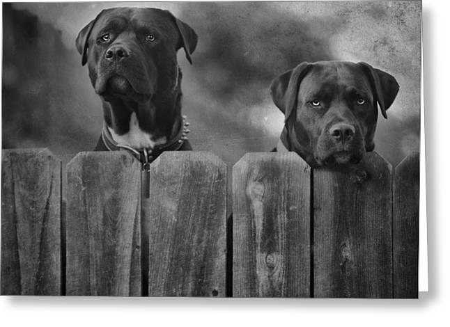 Dog Photographs Greeting Cards - Mutt and Jeff 2 Greeting Card by Larry Marshall
