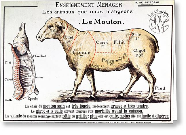 Decor Drawings Greeting Cards - Mutton Greeting Card by French School