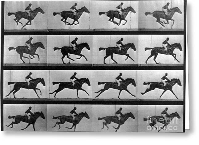 Muybridge Photographs Greeting Cards - Muybridge Locomotion Racehorse Greeting Card by Photo Researchers