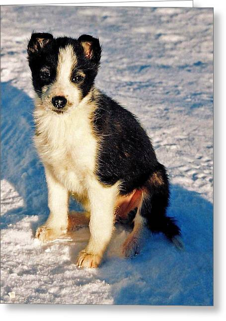 Iditarod Greeting Cards - My Best Friend Greeting Card by Juergen Weiss