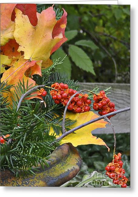 Bittersweet Greeting Cards - My Bittersweet Fall Greeting Card by Mary Machare