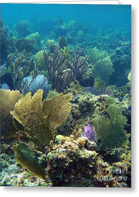 Undersea Photography Greeting Cards - My Blue Heaven Greeting Card by Li Newton