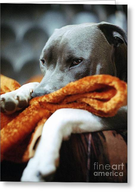 Lazy Dog Greeting Cards - My Favourite Blanket Greeting Card by Angel  Tarantella