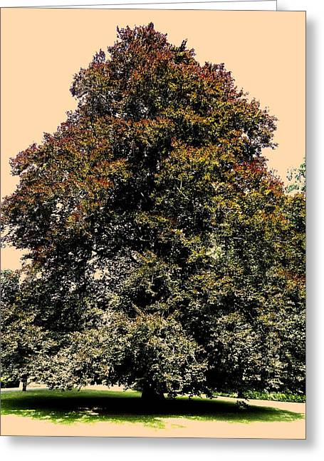 Licht Greeting Cards - My Friend the Tree Greeting Card by Juergen Weiss