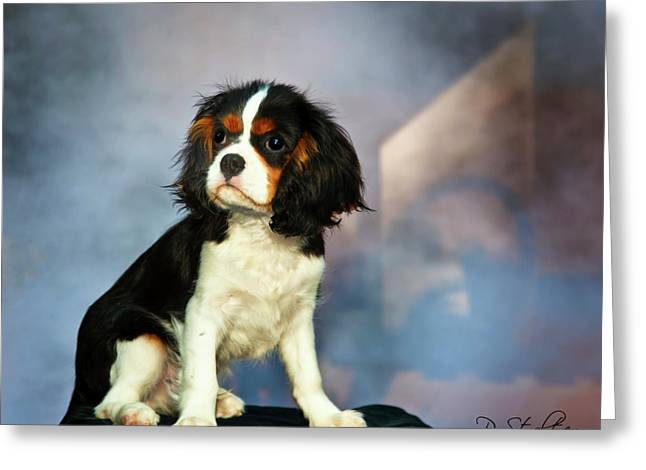 Casey Greeting Cards - My Guy Greeting Card by Patricia Stalter