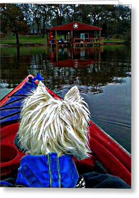 Westie Digital Art Greeting Cards - My Kayaker Buddie Greeting Card by Carrie OBrien Sibley