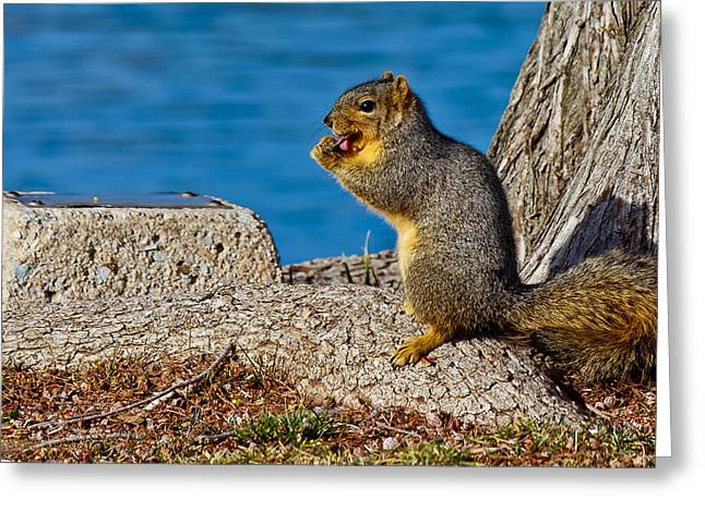 Fox Squirrel Greeting Cards - My Lollipop Greeting Card by Doug Long