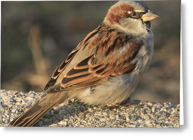 Great Birds Mixed Media Greeting Cards - My Lunch Buddy Greeting Card by Robert Pearson