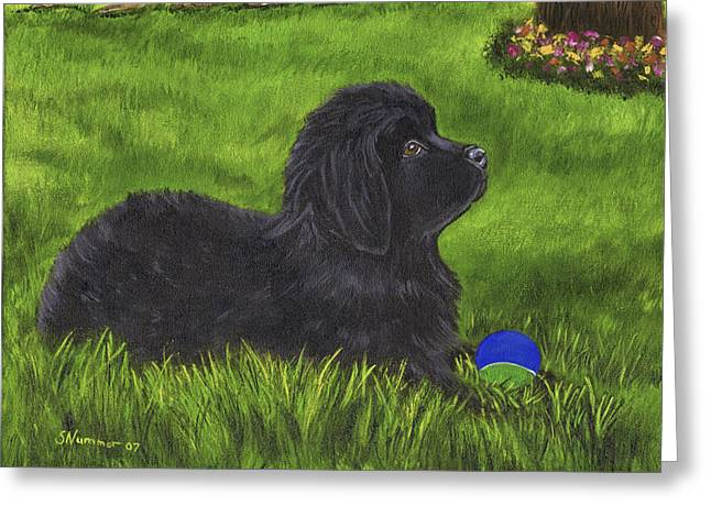 Newfoundland Puppy Greeting Cards - My New Ball Greeting Card by Sharon Nummer