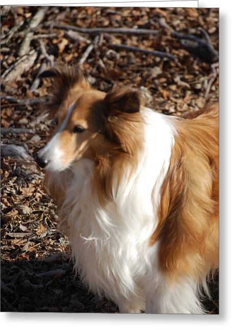 Dogs Digital Art Greeting Cards - My new best friend Greeting Card by David Lane