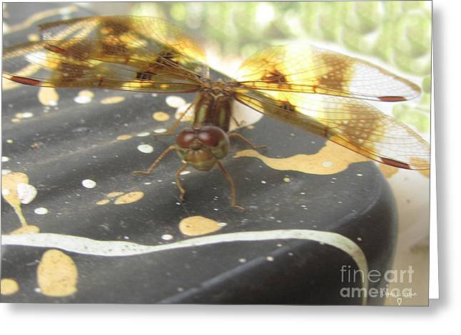 Amberwing Greeting Cards - My Own Art Work Greeting Card by Donna Brown