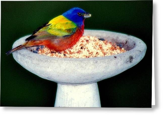 Bird-feeder Greeting Cards - My Painted Bunting Greeting Card by Karen Wiles