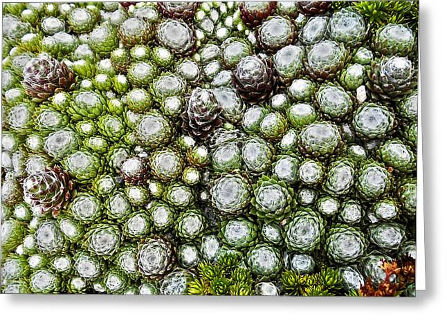 Fruehling Greeting Cards - My Rockery ... Greeting Card by Juergen Weiss
