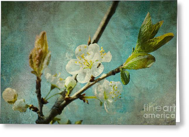 Fruehling Greeting Cards - My springtime Greeting Card by Angela Doelling AD DESIGN Photo and PhotoArt