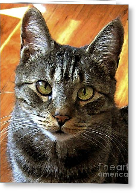 Photos Of Cats Digital Greeting Cards - My Sweet Cross-eyed Zachary Greeting Card by Dale   Ford