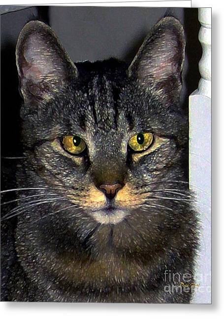 American Shorthair Greeting Cards - My Sweet Cross-Eyed Zack Greeting Card by Dale   Ford