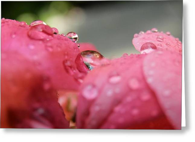 Reflection Of Geranium Flower Greeting Cards - My World Through a Waterdrop Greeting Card by Beth Akerman