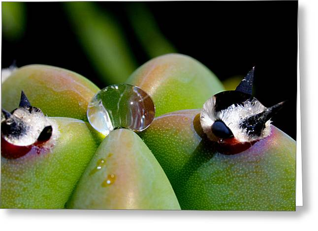 Beads Of Water Greeting Cards - Myrtillocactus Geometrizans with Dewdrop Greeting Card by Joe Schofield