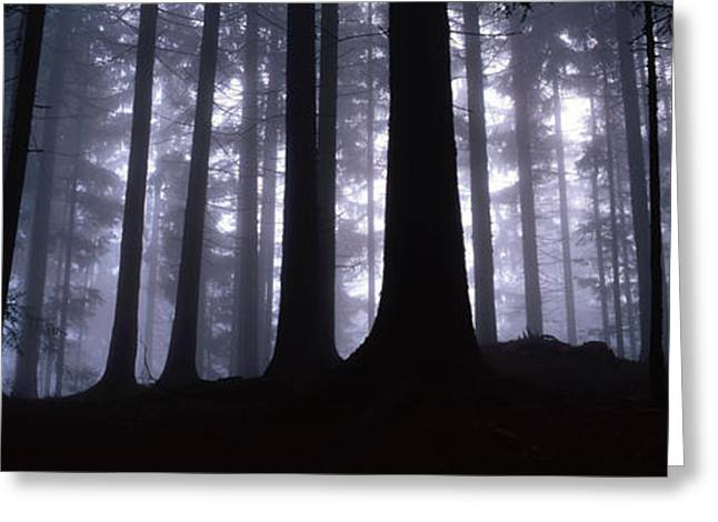 Eerie Greeting Cards - Mysterious forest Greeting Card by Intensivelight