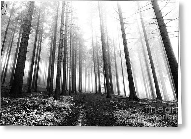 Ghostly Greeting Cards - Mysterious Forest Greeting Card by Michal Boubin