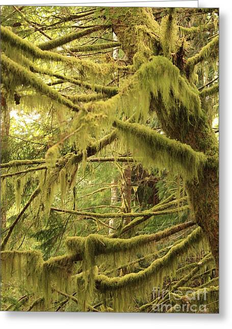 Moss Green Greeting Cards - Mysterious Moss Greeting Card by Carol Groenen