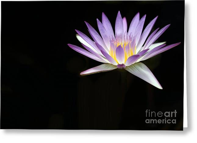 Water Garden Greeting Cards - Mysterious Water Lily Greeting Card by Sabrina L Ryan