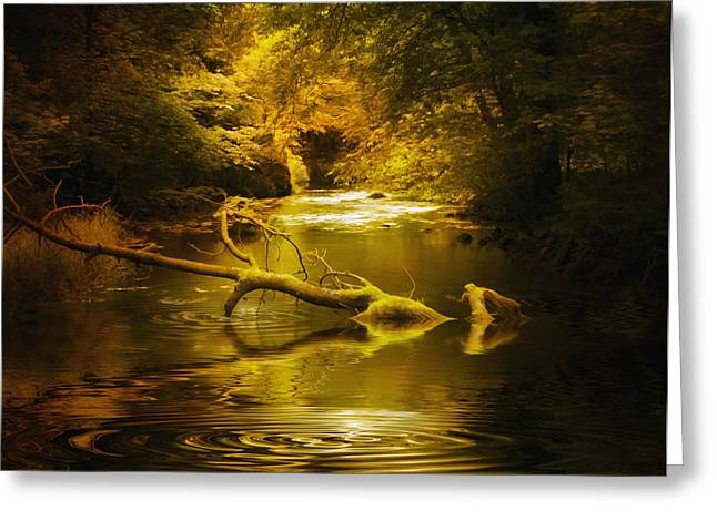 Mystery in Forest Greeting Card by Svetlana Sewell
