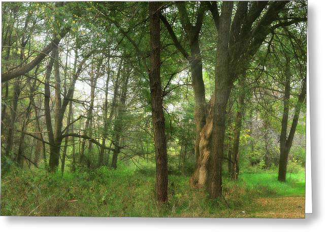 Mystic Forest Greeting Card by Scott Hovind