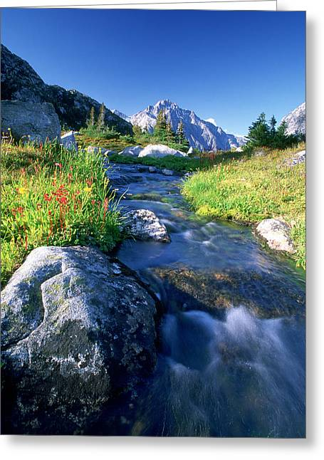Nabob Pass, Mt. Mercator, Waddington Greeting Card by David Nunuk