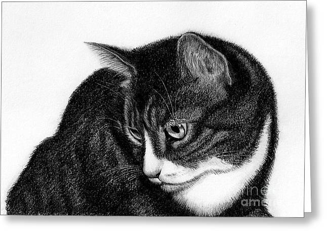 Drawings Of Cats Greeting Cards - Nadia Greeting Card by Heather Mitchell