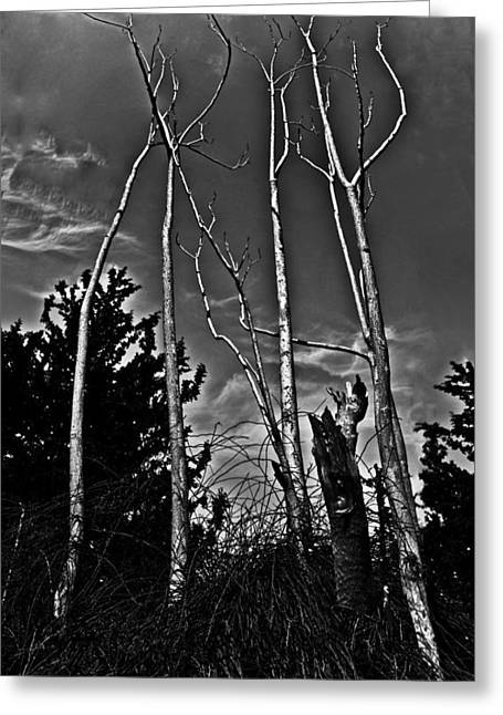 Cloudy Greeting Cards - Naked Trees Greeting Card by Nadya Ost