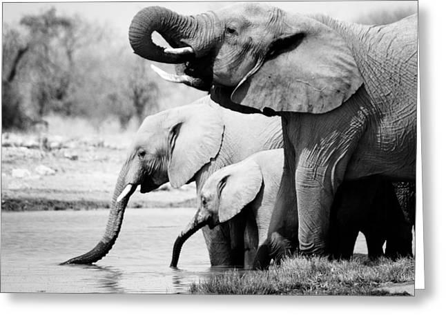 Squared Greeting Cards - Namibia Elephants Greeting Card by Nina Papiorek
