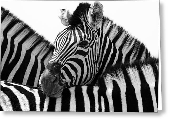 Zebras Greeting Cards - Namibia Zebras III Greeting Card by Nina Papiorek