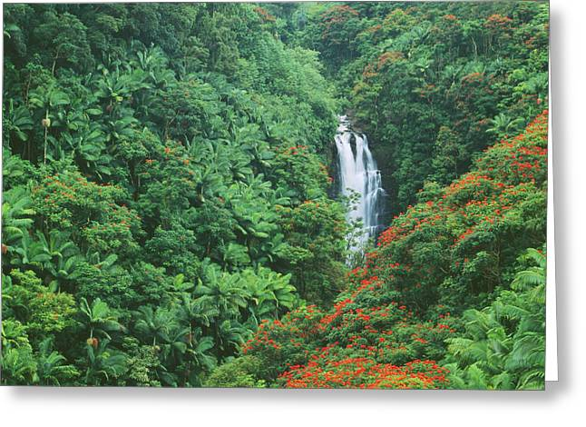 Hamakua Greeting Cards - Nanue Falls Greeting Card by Greg Vaughn - Printscapes