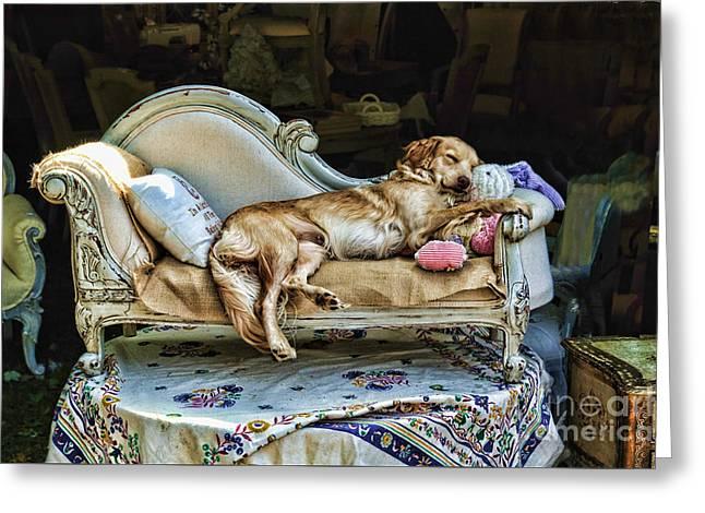 Dogs Digital Art Greeting Cards - Nap Time Greeting Card by Edward Sobuta