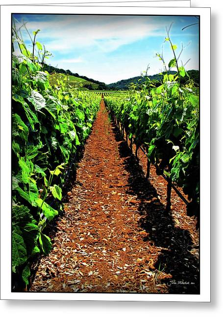 Sauvignon Digital Art Greeting Cards - Napa Rows of Grapes Greeting Card by Joan  Minchak
