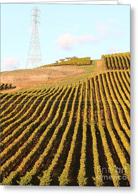 Napa Valley Vineyard . 7d9065 Greeting Card by Wingsdomain Art and Photography