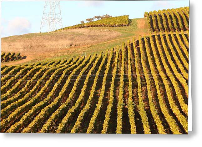 Napa Valley Vineyard . 7D9065 Greeting Card by Wingsdomain Art and Photography