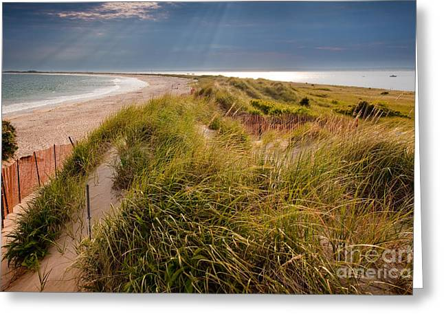 Eastern American Beach Grass Greeting Cards - Napatree Point Preserve Greeting Card by Susan Cole Kelly