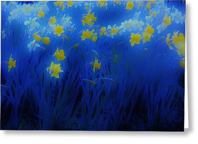 Cespon Greeting Cards - Narcisos Greeting Card by Xoanxo Cespon