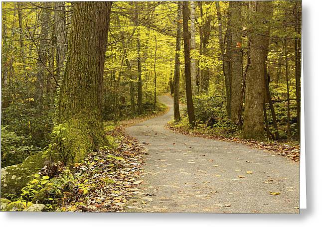 Roaring Fork Road Photographs Greeting Cards - Narrow Way Greeting Card by Gary L Suddath