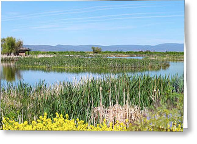 Aquatic Greeting Cards - National wildlife preserve marshes in Klamath Falls Oregon. Greeting Card by Gino Rigucci