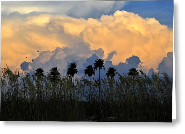 Bird Scape Greeting Cards - Native Florida Greeting Card by David Lee Thompson
