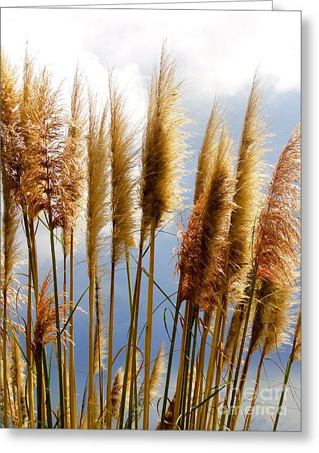 Thrive Greeting Cards - Native Grasses Greeting Card by Al Bourassa